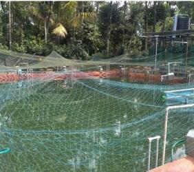"""IDUKKI HIGH DENSITY AQUACULTURE FARMING"""